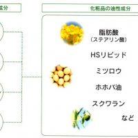 Cenbless 成増フェイシャル&ネイルサロン 【ノエビア化粧品】皮脂(アブラ)に限りなく近づいた5つのベース