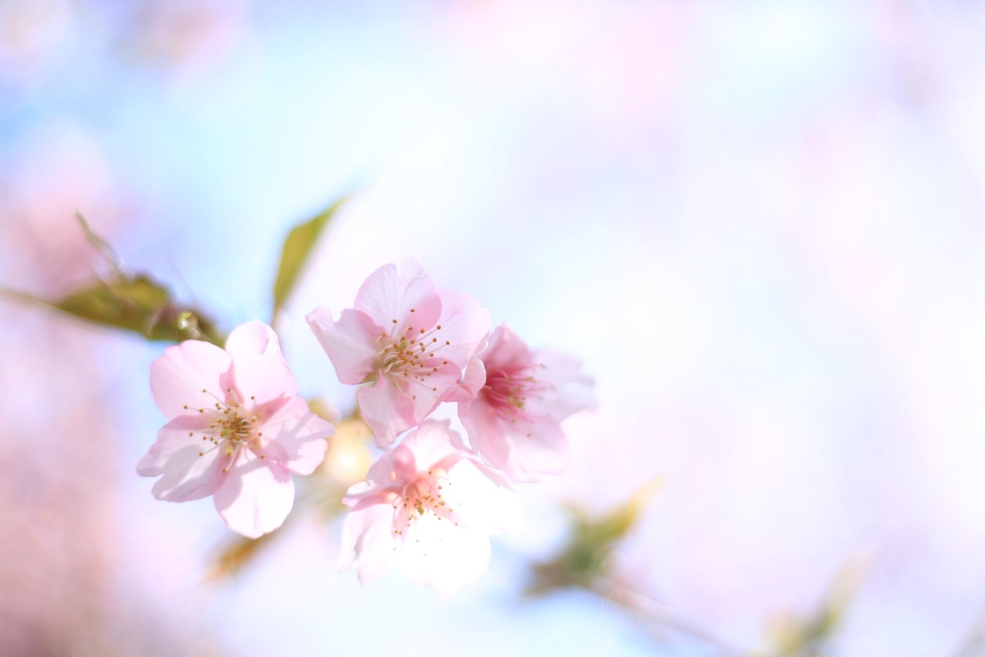 Cenbless 成増フェイシャル&ネイルサロン 2020年卒園式・卒業式・入園式・入学式